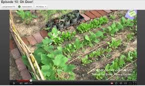 the 25 organic victory garden challenge redux growing a greener