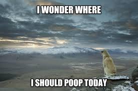 I Pooped Today Meme - livememe com contemplative dog