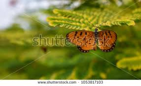 broken wings stock images royalty free images vectors