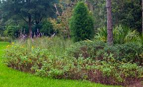 florida native nursery plant city fl how to start a florida native plant garden plant city observer