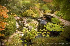 Aquascapes Of Ct Action Water Gardens