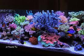 Saltwater Aquascaping Best Reefs From Europe 2 U2013 Krzysztof Tryc Tank Reefs Com