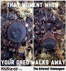 Spider Meme - that moment when your oreo walks away spider meme pmslweb