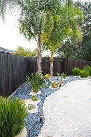 mexican fan palm verdant tree farm backyard plants and trees
