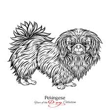 pekingese black and white graphic drawing of a dog vector