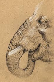 elephant sketch by sinccolor on deviantart