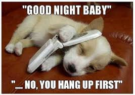 Funny Goodnight Memes - funny goodnight memes 50 best funny animal pictures