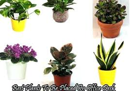 plants for office desk best plants for office flowers for office desk good plants best