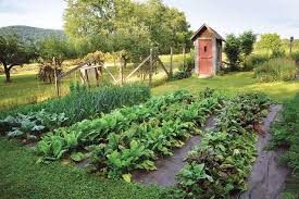 top organic vegetable gardening challenges and how to overcome