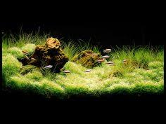Aquascape Fish Nature Aquarium Cool Ideas Pinterest Aquariums Water And