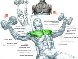 Muscles Used When Bench Pressing Exercise Instructions Incline Dumbbell Flys Hit The Upper Part Of