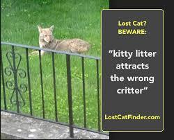 Lost Cat Meme - lost cat finder let s start a meme to combat that facebook