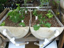 your home aquaponics system guide u2013 the best organic and
