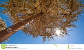 Palm Tree Patio Umbrella Exciting Palm Tree Umbrella Images Best Idea Home Design