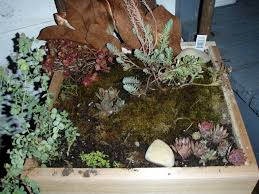 diy fairy garden ideas for your home kids haammss