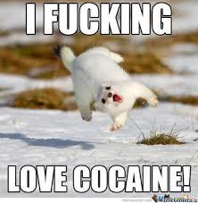 So Much Cocaine Meme - image 670877 cocaine bear know your meme