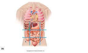 Abdominal Anatomy Quiz Unit I Language Of Anatomy Proprofs Quiz