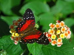 myths symbolism and meaning of butterflies