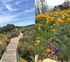 native california plants native plants in landscape management heaviland
