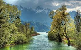 hd trees on the river side wallpaper free 150090