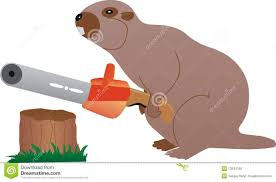 a beaver with chainsaw pictures to pin on pinterest pinsdaddy