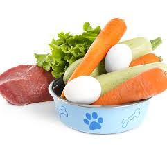 can dogs eat eggs a food safety guide by the labrador site