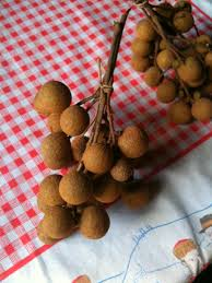 fruit similar to lychee modern nomad a field guide to fruit in madagascar