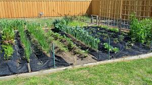 texas fall vegetable garden gardening ideas