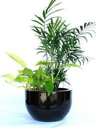 Indoor Plant For Office Desk Best Office Indoor Plants Hire Melbourne