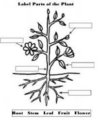 16 best gardening images on pinterest worksheets teaching ideas