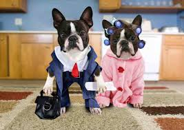 Boston Terrier Flag Boston Terrier Wallpapers Android Apps On Google Play