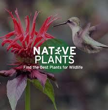 How To Plant A Garden In Your Backyard Garden For Wildlife
