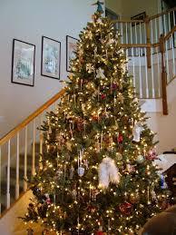 hill blue spruce tree