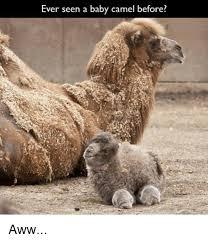 Camel Meme - 25 best memes about camel camel memes