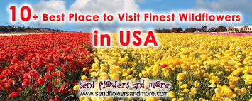 Place To Visit In Usa Best Place To Visit Finest Wildflowers In Usa
