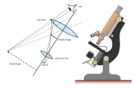 a light microscope image is formed by schoolphysics welcome