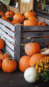 pumpkins for sale 2015 o lanterns and gravestones acanthus house