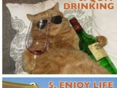 New Cat Meme - new years resolutions with cats weknowmemes
