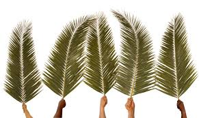 palm sunday palms for sale palm sunday st paul s rochester rochester mi