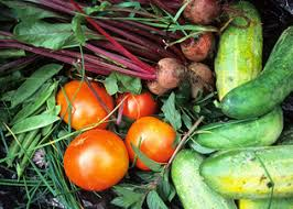 how to start your own vegetable garden eat out