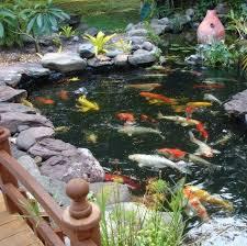 koi pond by backyard getaway www backyardgetawayponds com fish