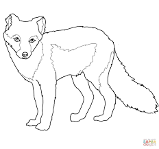arctic fox clipart black and white pencil and in color arctic