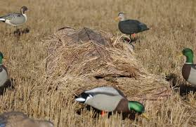 Goose Hunting Layout Blinds Your Store Sale Ground Force Layout Blind Av01502 Blades By