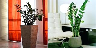 best light for plants the best plants for apartment dwellers park apartments indoor