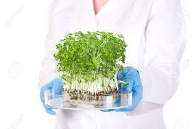 laboratory assistant holds small lab tray with plant on it blue