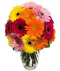 Gerbera Daisies Amazon Com Bloomsybox Flowers For Delivery Gerbera Daisies