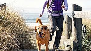 Gadgets For Pets Exercising With Your Dog 20 Must Have Gadgets Health