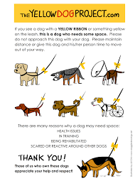 dog ribbon what does that yellow ribbon the yellow dog project woof
