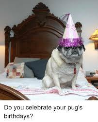 Birthday Pug Meme - 25 best memes about pug birthday pug birthday memes