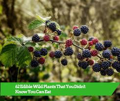edible photos 62 edible plants that you didnt you can eat